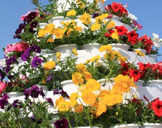 フラワーフェスティバルの花