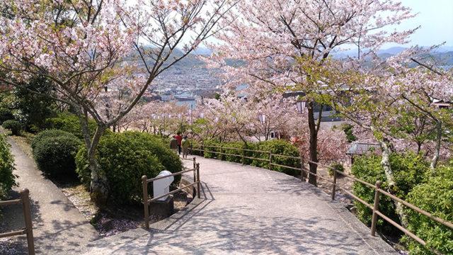 桜の名所100選に選ばれている千光寺公園の桜