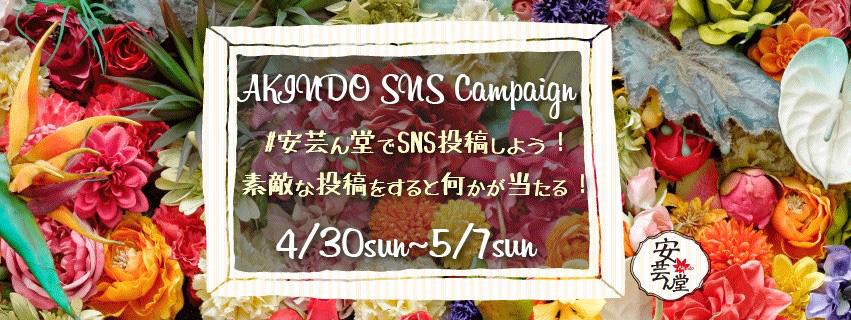 安芸ん堂SNSキャンペーン!フラワーフェスティバル!
