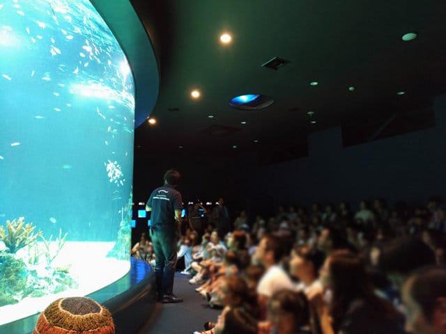 Dゾーン 輝くサンゴの海