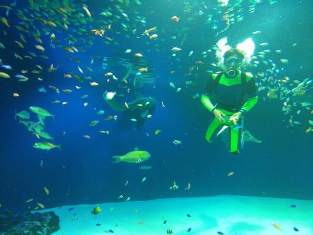 マリホ水族館のダイバー餌やり
