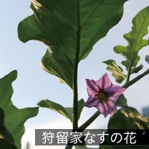 狩留家なすの花