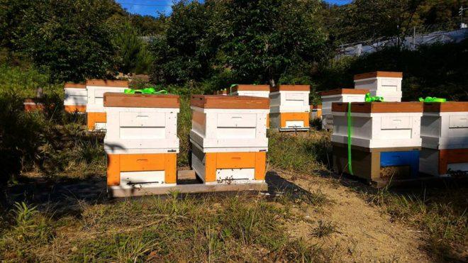 はつはな果蜂園の養蜂場
