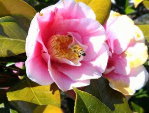 はつはな果蜂園養蜂場の蜜蜂