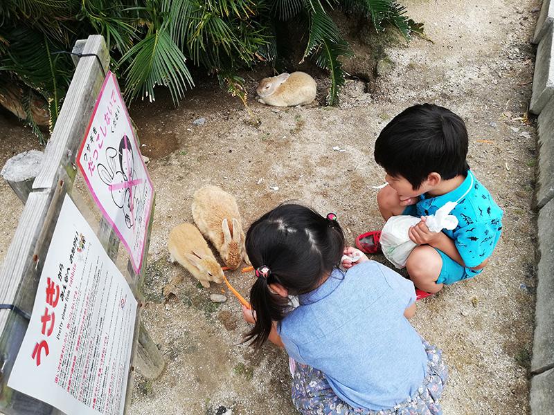 大久野島うさぎたちの餌やりに没頭する子供たち
