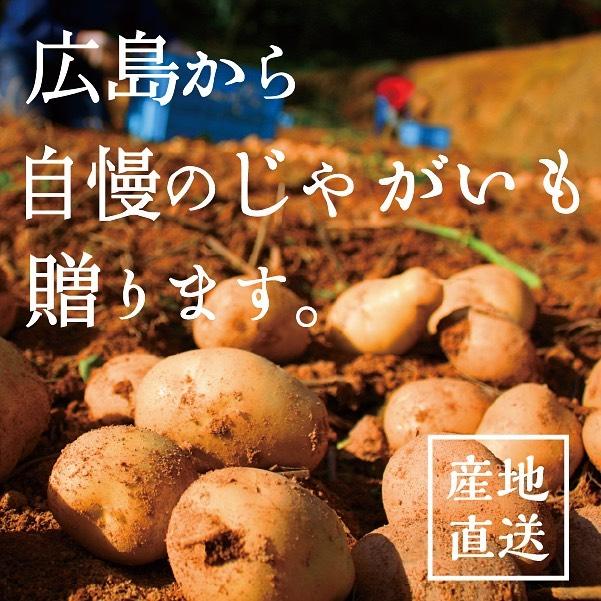 広島から自慢のじゃがいも、安芸津のじゃがいも贈ります!